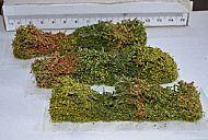Hedge / Bocage - 3 pack (TM26)
