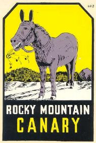 Rocky Mountain Canary