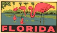 Florida, Flamingos