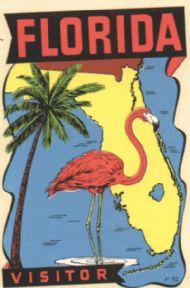 Visitor, Palm, Flamingo