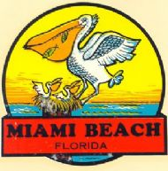 Miami Beach, Pelican with young