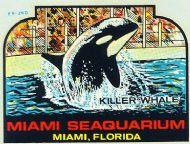 Miami, Seaquarium, Killer Whale