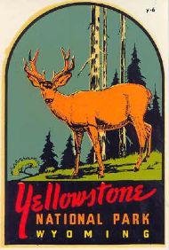 Yellowstone National Park, Elk
