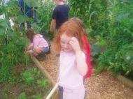 Bechgrove Garden