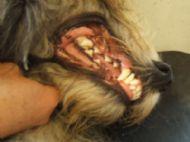 Teeth of a 2 year old