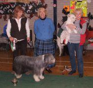 York Canine Association