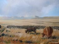 cattle on the moor