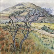 Windswept Trees, Glen Brittle