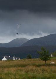 Hooded Crow v Herring Gull