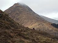 Deer above Cluanie. Am Bathach in background.