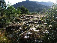 Autumn cobwebs in Kintail