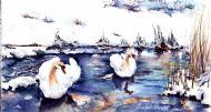 swans in ice and snow