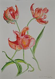 Tulips, Watercolour, J Miller
