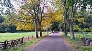 Autumn in Tentsmuir woods North Coast NCN1