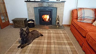 hamish the cairn giving the stove the seal of approval
