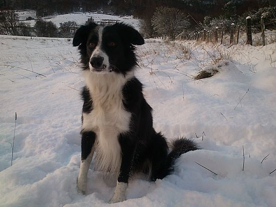 breagh taking a rest from playing in the snow
