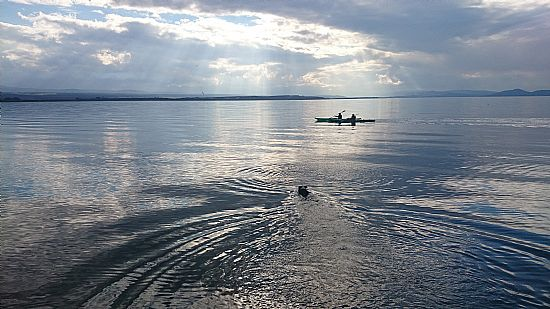 happy dog swimming in moray firth