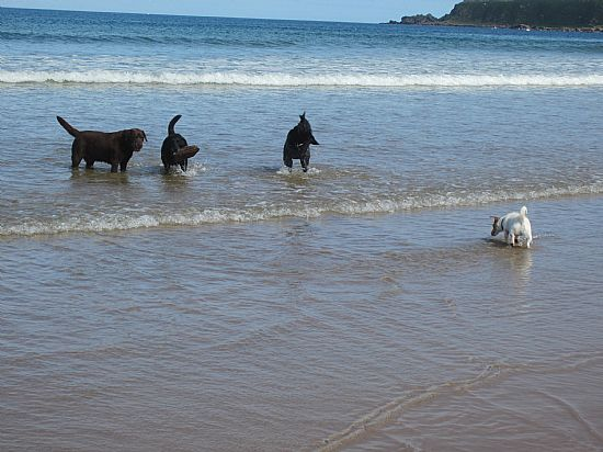 all beaches in the area are dog friendly