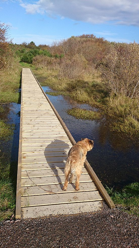 ardersier common new boardwalks