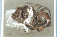 Heather's dogs drawn from life