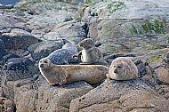 Calum's seal trips