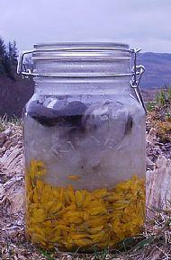 Spring April 1st 2012 - Gorse