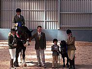 Annual Horse Show
