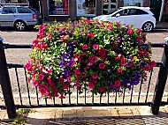 Summer plants barrier baskets in Market Square -- 25 July 2016.  Photo by Julie Lomax.