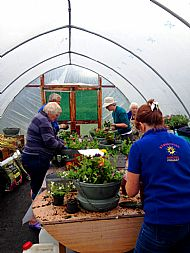 Planting up the street baskets at the polytunnel -- 06 June 2017. Photo by Julie Lomax.