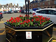 Spring tulips and pansies in Market Square large octagonal planter -- 13 March 2017.  Photo by Julie Lomax.