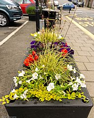 Market Square planter -- 05 July 2019. Photo by Martin Sim.