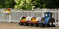 Station barrel-train planter and fence baskets -- 05 July 2019.  Photo by Martin Sim.