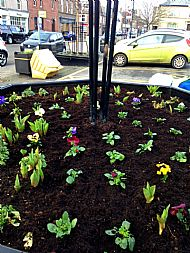 Large octagonal planter in Market Square with Spring plants -- 24 February 2019. Photo by Julie Lomax.