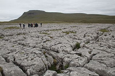 on the limestone pavement below ingleborourgh