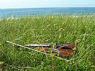 Fiddle on the machair, Uist