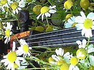 Marjorie's cello on Barra
