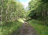 Old Rankine Mine Haulage Line Walk, Douglas