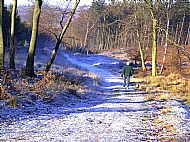 Cannock Chase - Winter
