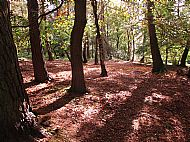 Cannock Chase - Autumn