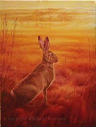 Sunset Hare