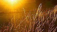 'Spent Grassses'
