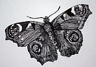 Detail from 3 Insects