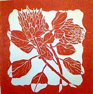 Protea Red