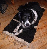 Storm's rug