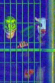 Masked Gang Member - Playground