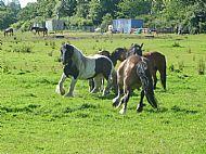 Herd life