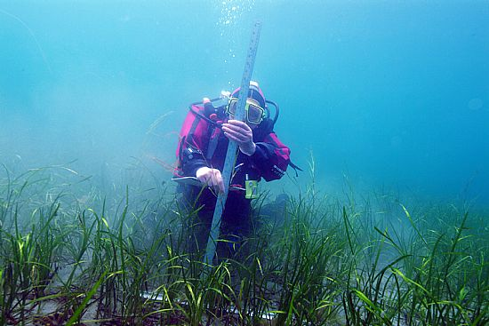 survey diver ostera