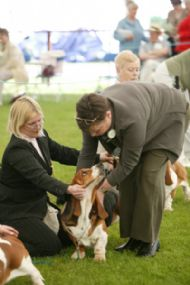 Aileen judging at the May Scottish Kennel Club Championship Show