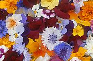 FAB FLOWERS! fresh edible flowers, naturally grown in Highland Scotland