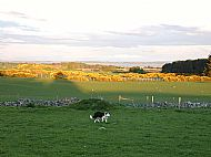 View east across our fields to Dornoch beach & beyond